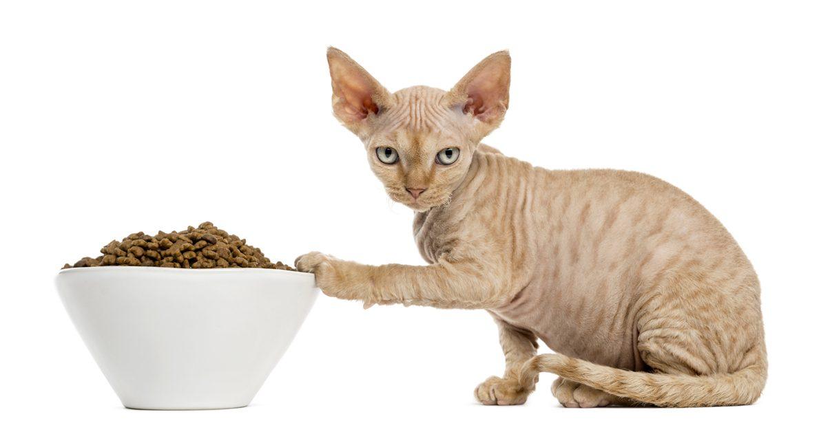 Сфинкс корм для кошек